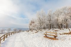 Winter scene with snow on the Dutch Posbank Stock Photo