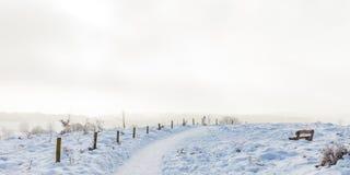 Winter scene with snow on the Dutch Posbank Stock Image
