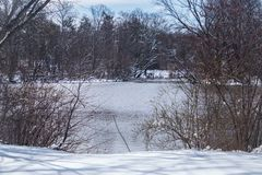 Winter scene with snow and lake. Beautiful winter scene snow covered ground with lake and ducks  and lonely Stock Images