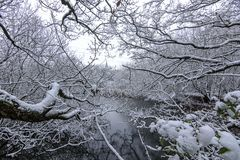 Winter Scene - Snowfall at Wirral Country Park Royalty Free Stock Photography