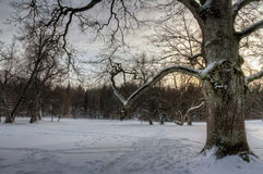 Winter scene in a snowy park Stock Images
