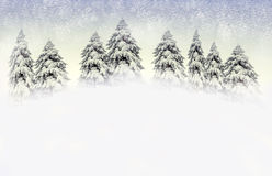 Winter scene with snowy pines