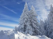 Winter scene with snowy pines and sky. Winter scene with snowy pines and blue sky royalty free stock photos