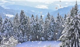 This is a holiday greeting card with mountains and trees covered in snow. Winter scene with snowy spruces. Winter landscape with snowflakes and with a copy space Stock Photography