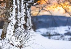 Winter Scene - Snowy Trees- Sunset Stock Images