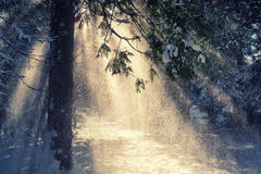 Winter scene with sun rays Royalty Free Stock Photo