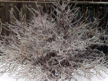 Winter scene. Winter time in Southern Ontario, Canada Stock Photo
