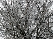 Winter scene. Winter time in Southern Ontario, Canada Royalty Free Stock Photography