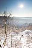 Winter scene, tree and distant. Sunny winter scene with tree and distant hills in portrait orientation stock image