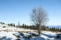 Winter scene with tree on snow Royalty Free Stock Photography