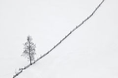 Winter scene with tree and wooden fence Stock Photos
