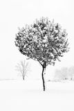 Winter scene with trees Royalty Free Stock Photography