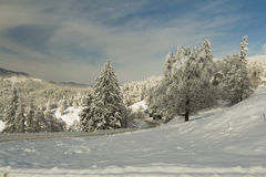 Winter scene with trees covered in snow and road Royalty Free Stock Photo