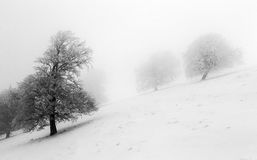 Winter scene of trees in fog Royalty Free Stock Photo
