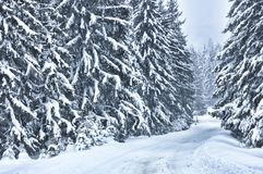 Winter scene with trees in the forest. Road covered with snow near the forest Stock Photos
