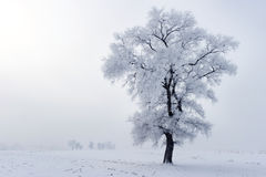 Winter scene. Royalty Free Stock Photo
