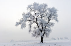 Winter scene. Royalty Free Stock Photography