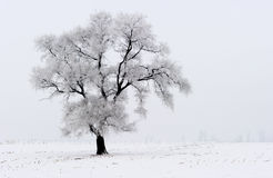 Winter scene. Stock Photo