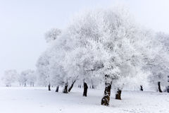 Winter scene. Stock Images
