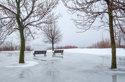 Winter scene of trees and park benches Royalty Free Stock Image