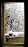 Winter Scene through a Window. A beautiful winter scene of snow covered trees and deck as seen through the glass in a full-length patio door.  Taken in Warsaw Stock Photos