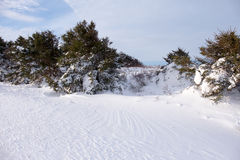 Winter Scene. Windswept snow in front of trees in Stanhope, PEI Royalty Free Stock Photos