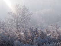 Winter scene. Ry with sunshine and coldness royalty free stock photography
