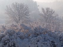 Winter scene. Ry with sunshine and coldness stock photo