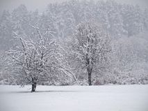 Winter scene. Ry with sunshine and coldness stock photography