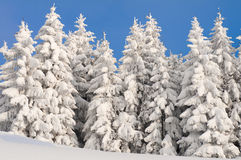 Free Winter Scene With Ice And Snow Royalty Free Stock Photos - 23260048