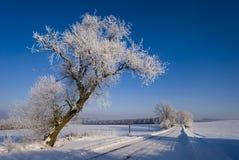 Winter Scenery Stock Photos