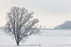 Winter scenery Stock Photography