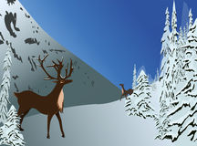 Winter scenery. Lovely deers meeting, surrounded by beautiful snowy pine trees and mountain winter scenery Stock Images