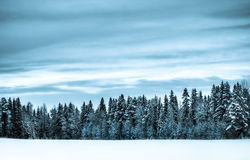 Free Winter Scenery Royalty Free Stock Images - 3930699