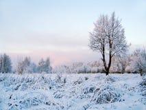 Winter scenery. Alone frozen tree. Winter landscape Royalty Free Stock Image