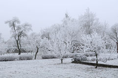 The winter scenery Royalty Free Stock Image