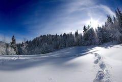 Winter scenery bathing in sunrays. Winter scenery, forest edge near Ljubljana, Slovenia on clear sunny day Stock Photography