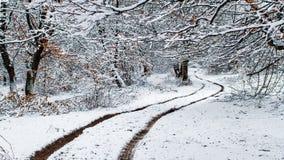 Winter scenery Royalty Free Stock Photos
