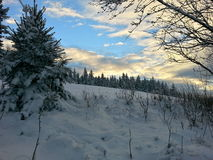Winter scenery. Beautiful view at winter forest during a sunset Stock Photo