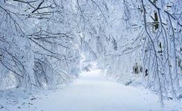 Winter scenery in Carpathian mountains near Pezinok, Slovakia Stock Images
