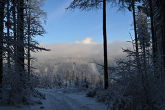 Winter scenery. An exclusive photo for using in newspapers, on websites etc. Photo was taken in Zlaté Hory (village in the Czech Republic). 28th December 2014 Royalty Free Stock Photos