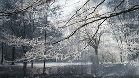 Winter scenery and falling snow