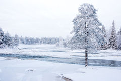 Winter scenery from Finnish nature Stock Images