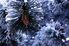 Winter scenery. Fir tree covered in snow royalty free stock photos