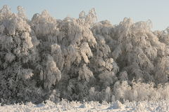 Winter scenery in forest. Snow cover the village, frozen trees and bushes Stock Images