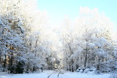 Winter scenery. In the forest Royalty Free Stock Photography