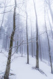 Winter scenery in the forest with birch trees and fog Stock Image