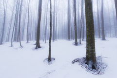 Winter scenery in the forest with birch trees and fog Stock Images