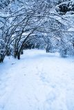 Winter scenery forest covered up with snow Stock Image