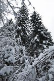 Winter scenery forest covered up with snow Stock Photo